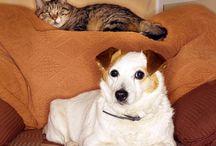 Dog Stuff because I got a dog. / by Cheryl Nelson