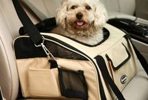 Dogs Carriers