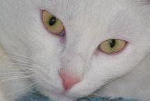 Cat ...  =^.^=  BIANCANEVE / micia bianca abbandonata insieme a tutta la sua cucciolata