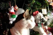 santa claus / christmas 2014