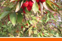 Wildfrüchte- und Kräuter