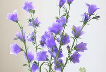 Pics flowers