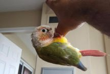 Birds for adoption
