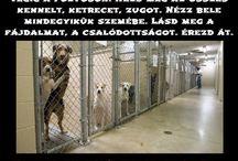 Védd az állatokat; fogadj örökbe! (Save the animals, adopt an animal!) / Idő közben egy-egy kutyus gazdisodott; elhunyt. Igyekszem frissíteni az adatokat, de naprakész infót az adott menhely honlapján, Facebook oldalán találtok! Kattintsatok át, biztos találtok egy szempárt, akivel egymást keresitek! Minden állat pénzbe kerül, s rejt meglepetéseket (pozitív, negatív), lakva ismerjük meg egymást, nem a menhelyek bemutatása alapján (iránymutató). Egyik kutyusban x dolog, másikban y lesz kifogásolható. Szoktassuk, tanítsuk őket a szeretet erejével!
