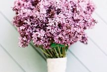 FLOWERS + PLANTS / Beautiful Flowers and Plants For The Home