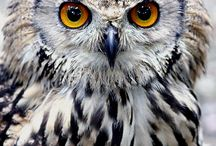 Owl, I love them