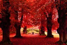 Arbres rouges