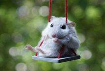 Favorite Cute Animal Photos