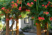 Gardening: Invasives & Containing them!