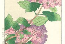 Osuga Yuich - Woodblock prints / Flower Series by Osuga Yuich (1939~)