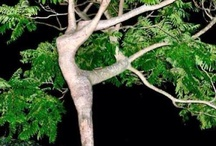 Tree Art: artistic beauty in nature... / Amazing and stunning or bizarre photos of curious or unusual trees.