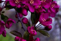 Beautiful Flowers / by Tracie Szatko Olson