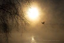 Sauk Prairie Riverway Eagles