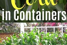 Sweetcorn Growing Guides and Recipes