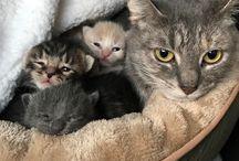 αχουτα τα γατάκια