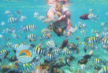 Wisata Bawah Laut / Indahan Wisata Bawah laut di Lombok