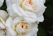 Flores / Flores- tipos variados