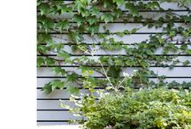 Courtyard / by Linda Mackinnon