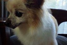 Papi / my lovery dog.
