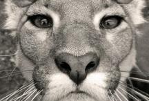 Animals :) / by Gina Lolohea