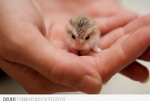 baby animals / by Monica Talley