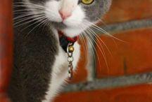 Gatitos / #Gatos #7zarpas
