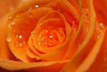 I ❤ Orange