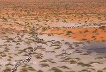 Le grand Sud Algérien Le Sahara