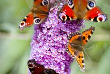 butterflies flutter by / by Donna Chambers