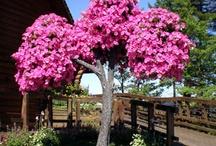 Petunienbaum