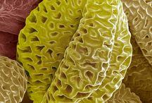mikroskopia