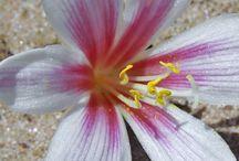 Flora en el Salar de Uyuni