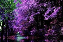 Nature in purple