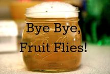 How To Get Rid Of Fruit Flies: Fast And Easy / So summers are here! And with the heat of summers comes a huge variety of super juicy, sweet and tasty fruits! But wait, you're not the only one to enjoy the sweetness of the fruits, some unwanted creatures are ready to invade your kitchens and make your environment really unpleasant, they are fruit flies!