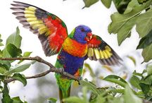 Colorful Birds / The most amazing colorful birds on The Earth