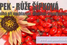 Účinky bylinek / Bylinky a jejich účinky na naše tělo