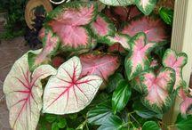 Gardening / by Donna Collier Williams