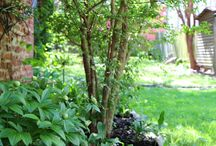Lawn & Garden Inspiration