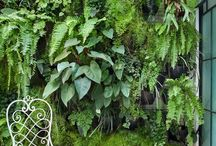 Wall gardens ideas