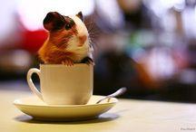 Cute as a button / Unbealievebly cute things