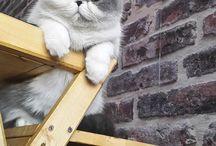 ❤️ cats ❤️