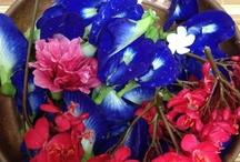 Flowers / by Lakshmi Gs