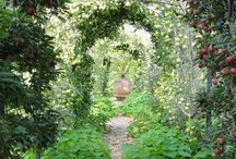Garden - espaliered fruit