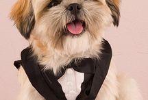 Pet Accessories / http://www.weddingfaire.com.au/fur-babies/