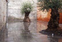 Sier bestratingen / Alle soorten bestratingen voor in de tuin of oprit. Ideeën genoeg en voor alles een passende bestratingskeuze. Van beton tot keramische tegels