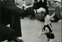 Historical dog photos