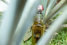 Our Agave / 0 / by Embajador Tequila