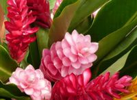 Tropical flowers / by Sue Brooks