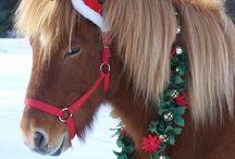 christmas horses
