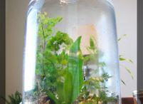 terraria, indoor water-tuintjes en hangende indoorplanten